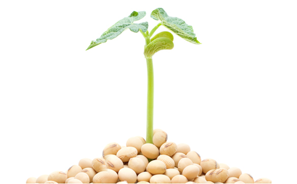 Identity-Preserved, Non-GMO Soybeans